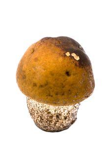 Free Little Mushroom Stock Photography - 8038862