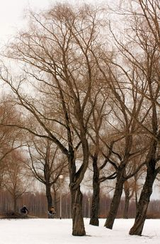 Free Trees In Wintry Park Royalty Free Stock Photo - 8039125