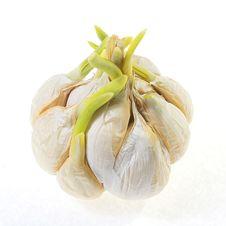 Free Garlic Stock Photography - 8039272
