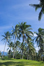 Free Coconut Trees Royalty Free Stock Photography - 8040557
