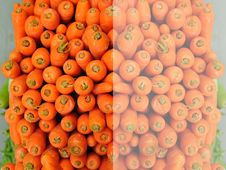 Free Orange Carrot In The Market Stock Images - 8040574