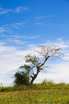 Free Lone Tree Stock Photography - 8040642