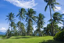 Free Coconut Trees Royalty Free Stock Image - 8040676