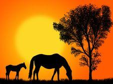 Free Horse Pasture Stock Photo - 8041200