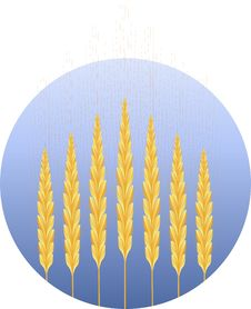 Free Wheat Icon Stock Image - 8041871