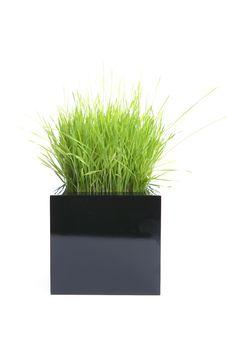 Grass Sprouts Stock Photos