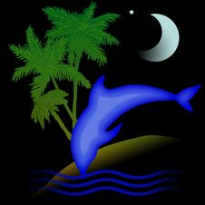 Free Dolphin Holiday Night Stock Images - 8043544