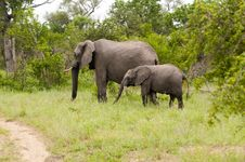 Elephant With Baby Elephant Royalty Free Stock Image