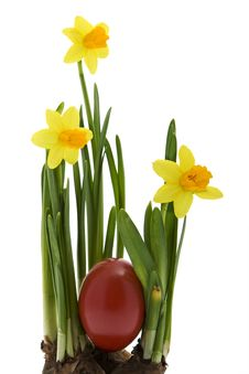 Easter Eggs With Yellow Narcissus Stock Photos