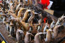 Free Japanese Festival Food River Fish Stock Image - 8044271