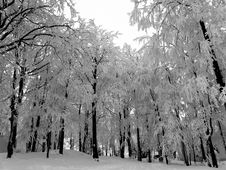 Free Winter Royalty Free Stock Photography - 8044727