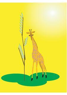 Free Giraffe Royalty Free Stock Photo - 8045105