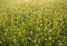 Free Meadow With The Sun Royalty Free Stock Photos - 8046468