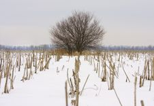 Free Lonely Tree In The Field Stock Image - 8047221
