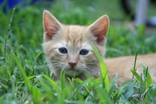Free Tabby Kitten Stock Image - 8049231