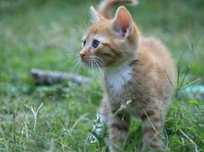 Free Tabby Kitten Stock Photo - 8049240