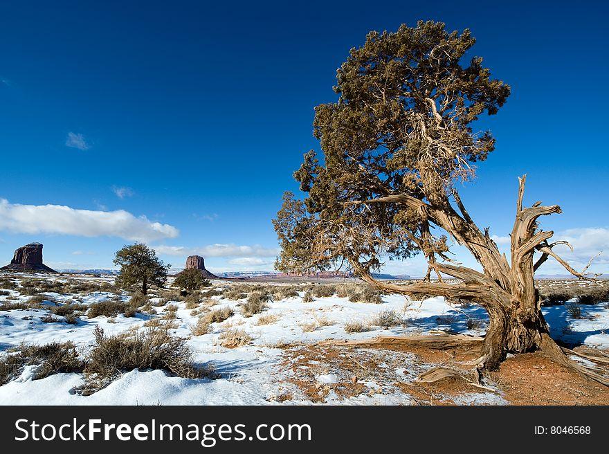 Lone broken tree