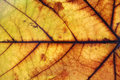 Free Autumn Leaf Royalty Free Stock Photos - 8057428