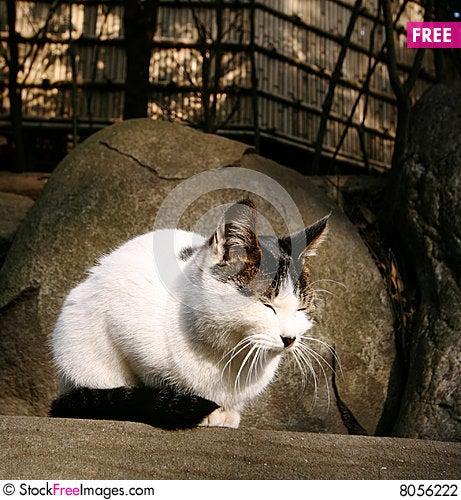 Free Cat Enjoy Sunshine Stock Photography - 8056222