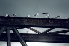 Free Bird Bridge Royalty Free Stock Photo - 8051095