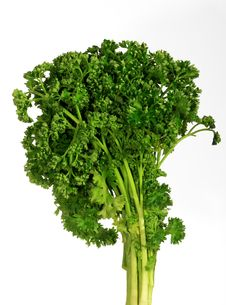 Free Curly Parsley Stock Photo - 8051100