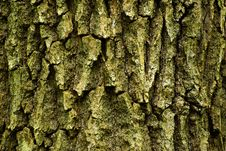 Free Bark Stock Photo - 8051460