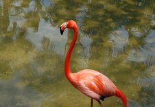 Free Flamingo Stock Photo - 8052200