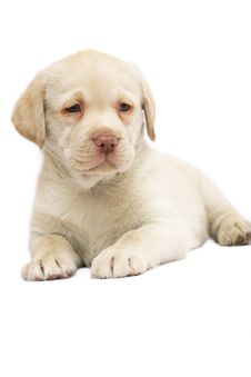 Free Pup. Royalty Free Stock Image - 8052416