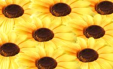 Free Sunflower Royalty Free Stock Images - 8054399
