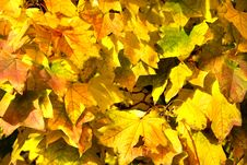 Free Autumn Leaves 7 Royalty Free Stock Images - 8056129