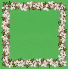 Free Apple Blossom Frame2 Royalty Free Stock Photos - 8056238