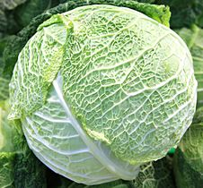 Free Cabbage Stock Photography - 8056782