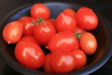 Free Tomatoes Stock Photo - 8057710