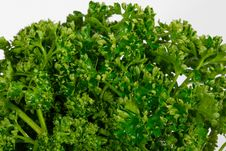 Close Up View Of Curly Parsley Royalty Free Stock Image