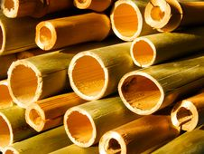 Free Stalk Of A Plant A Bamboo Stock Photo - 8058190