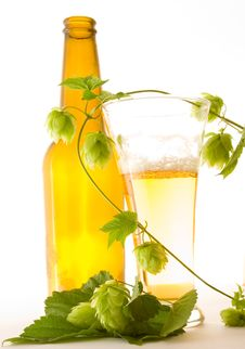 Free Glass Beer Stock Photo - 8058280