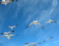 Free Seagulls In A Sky Royalty Free Stock Images - 8059629