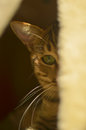 Free Cat Stock Photography - 80526322