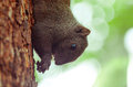 Free Squirrel Eatting Royalty Free Stock Image - 80529876