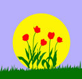 Free Vector Illustration Tulip Stock Photo - 8063780