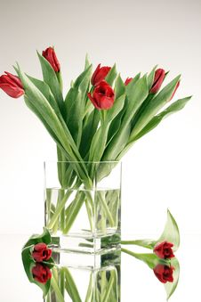 Free Red Tulips Stock Photo - 8060320