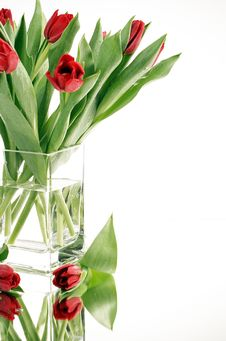 Free Red Tulips Royalty Free Stock Photo - 8060345