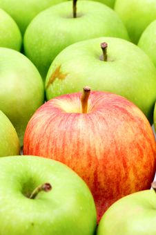 Free Red Apple In Green Apples Stock Photos - 8061273