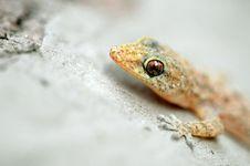Lizard Stock Photo
