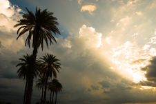 Free Palm Trees At Sunset Royalty Free Stock Photo - 8061655