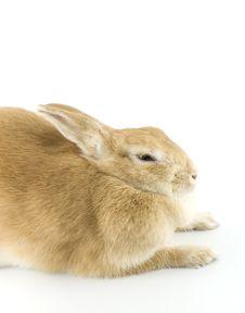 Free Baby Rabbit Stock Photos - 8062113