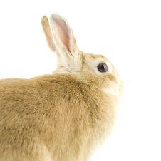 Free Baby Rabbit Stock Photography - 8062142