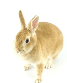 Free Baby Rabbit Stock Image - 8062151