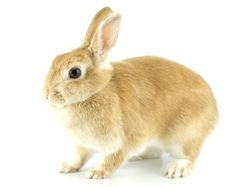 Free Baby Rabbit Stock Photography - 8062162