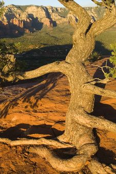 Free Tree At Sunset Stock Photos - 8063593